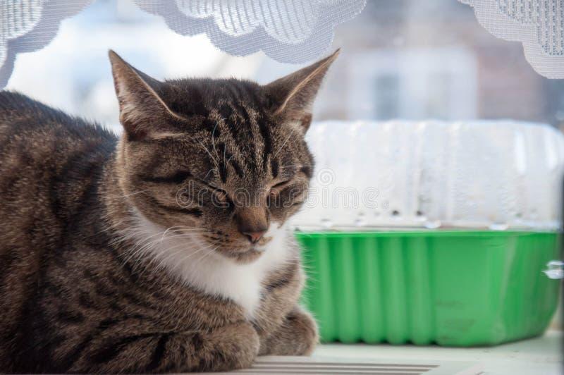 在窗口的1美好的猫baldeet 库存照片