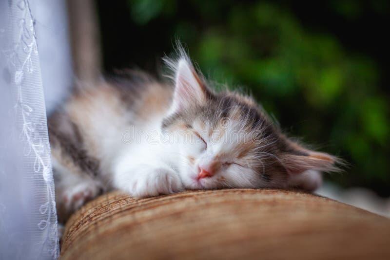 在窗口附近的梦想发烟性小猫 库存图片