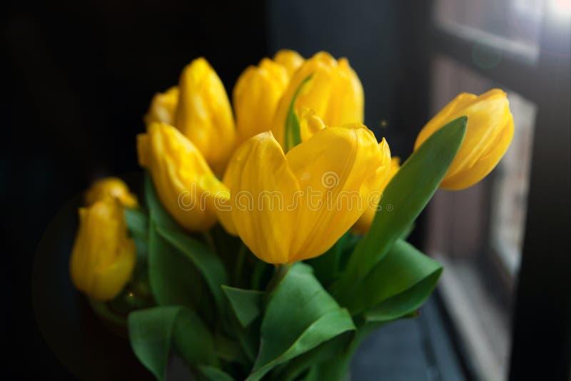 在窗口backround的美丽的黄色郁金香与光束,关闭 库存照片