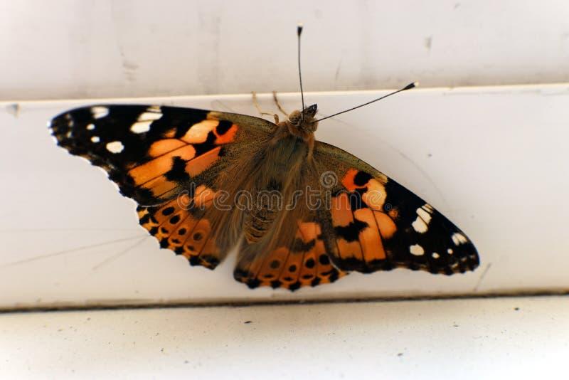 在窗台特写镜头照片的五颜六色的蝴蝶 图库摄影