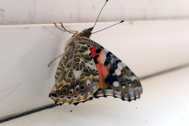 在窗台特写镜头照片的五颜六色的蝴蝶 免版税库存照片