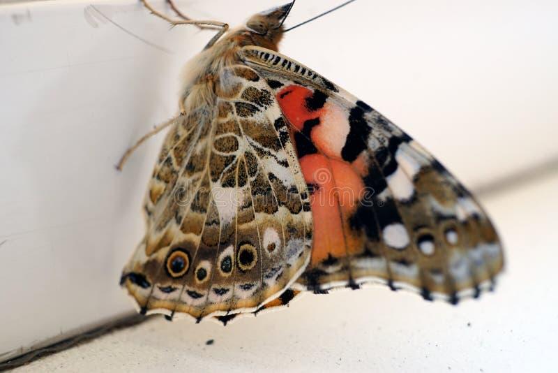 在窗台特写镜头照片的五颜六色的蝴蝶 库存图片