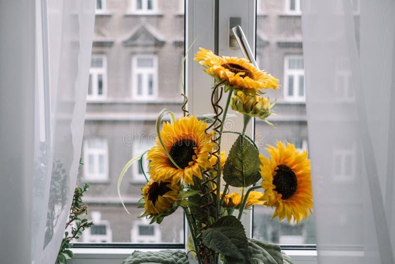 在窗台的向日葵 免版税库存照片