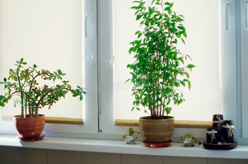 在窗台的室内植物立场 库存照片