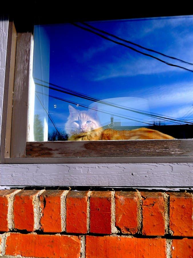 在窗台的橙色猫 免版税图库摄影