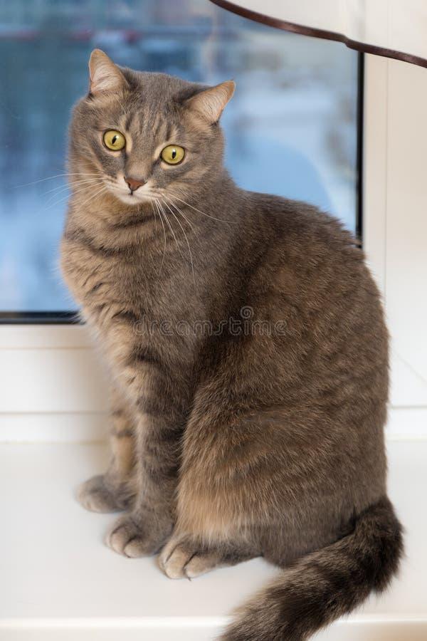 在窗台的猫 库存图片