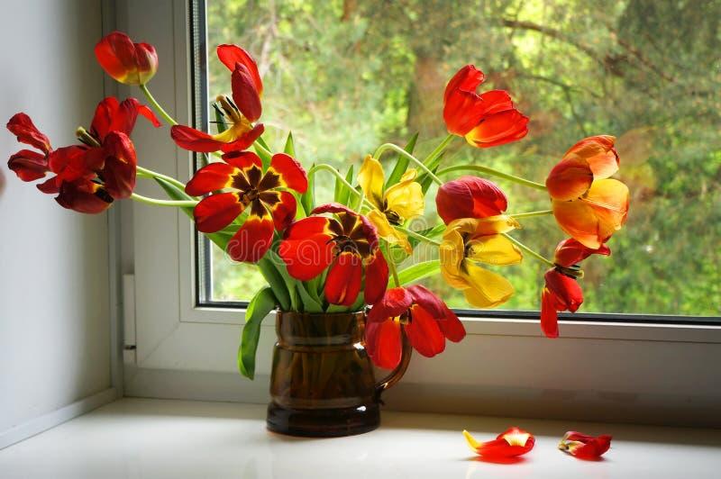 在窗台的红色和黄色郁金香 免版税库存照片