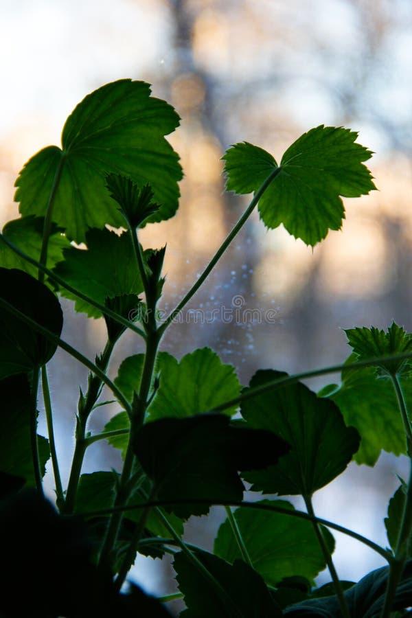 在窗台的绿草叶子 免版税库存照片