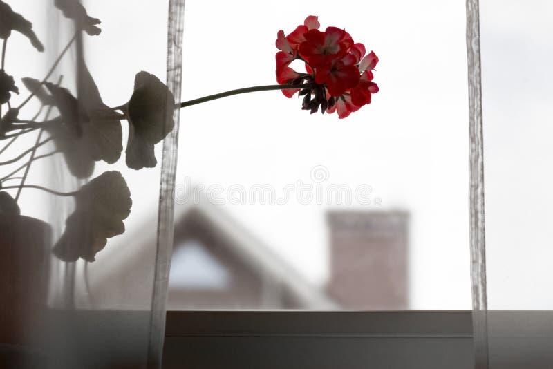 在窗台的花 免版税库存照片