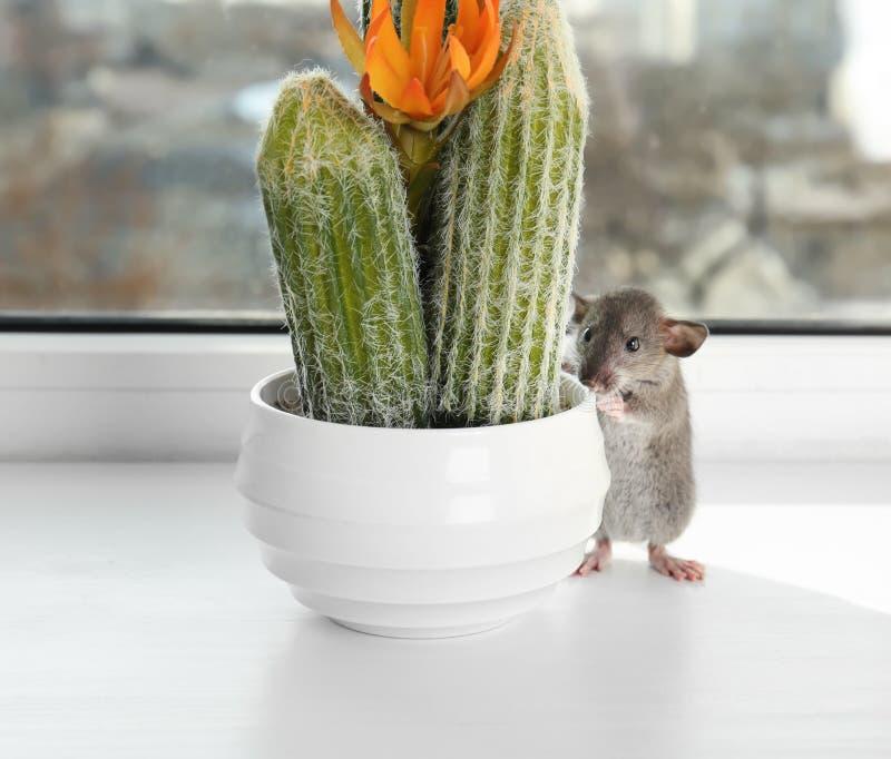 在窗台的逗人喜爱的小的鼠 图库摄影