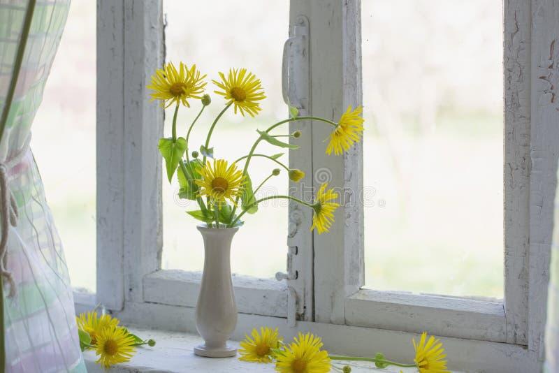 在窗台的黄色春黄菊 免版税库存图片