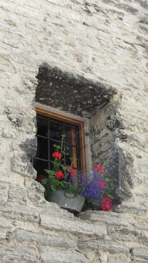 在窗槛花箱的明亮的花 免版税库存图片