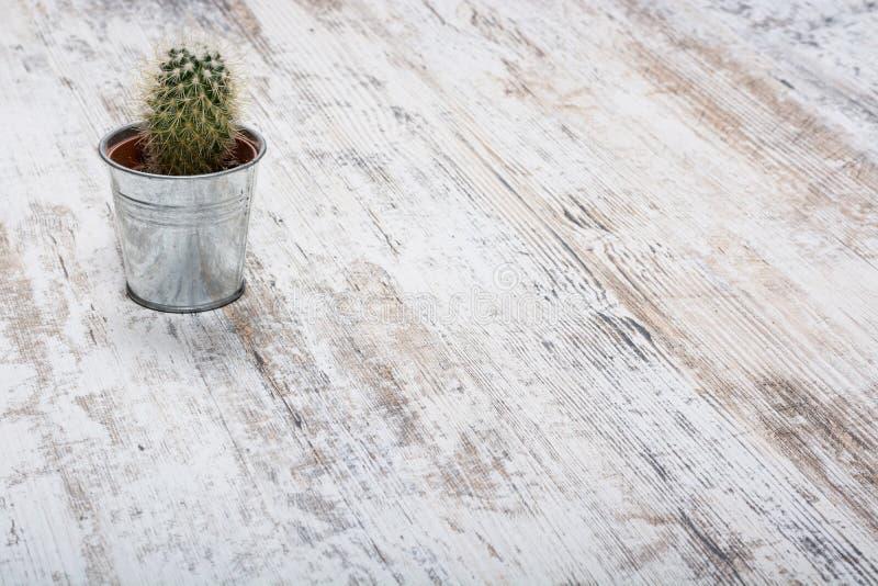 在站立在木背景的一个小铁桶的仙人掌 图库摄影