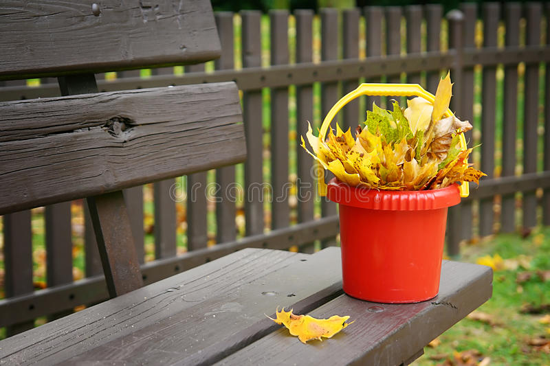 在站立在长凳的塑料桶的叶子 免版税图库摄影