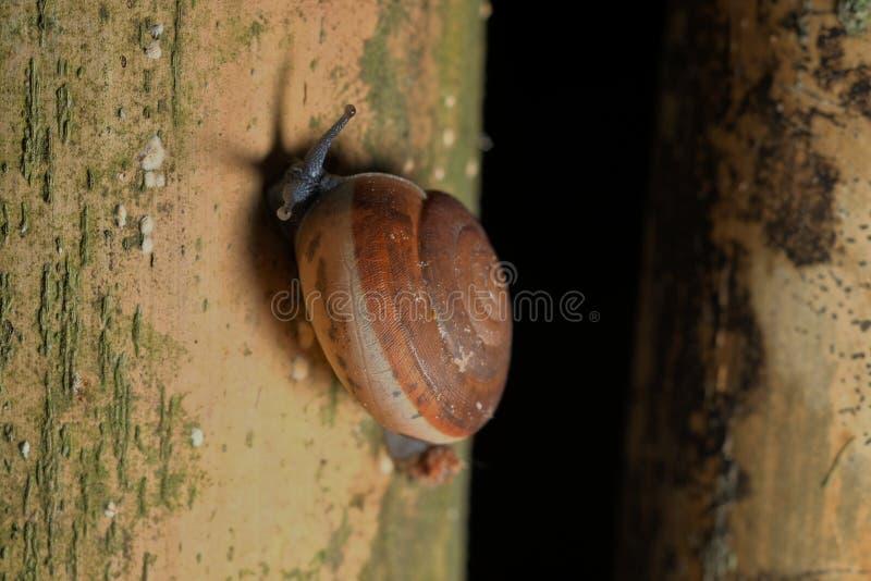 在竹子的小的蜗牛 免版税图库摄影