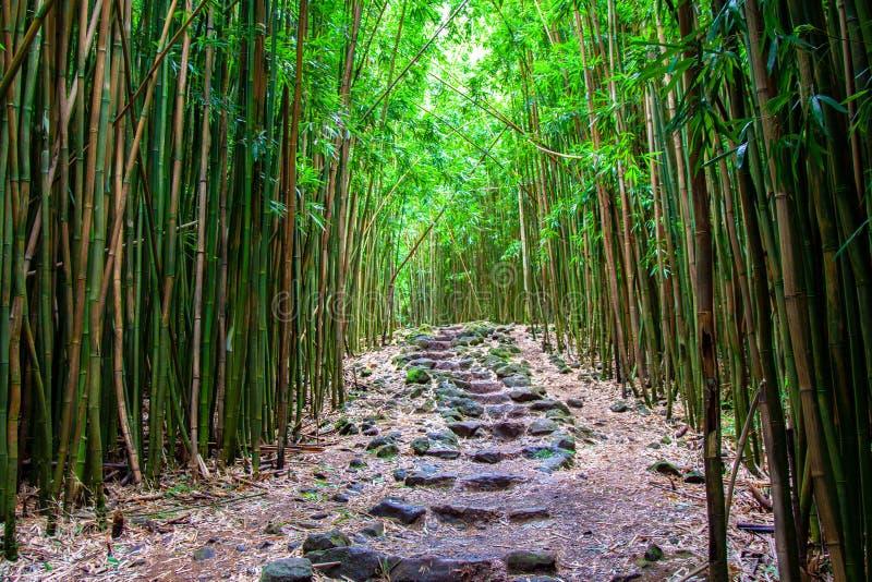 在竹森林的石步 免版税图库摄影