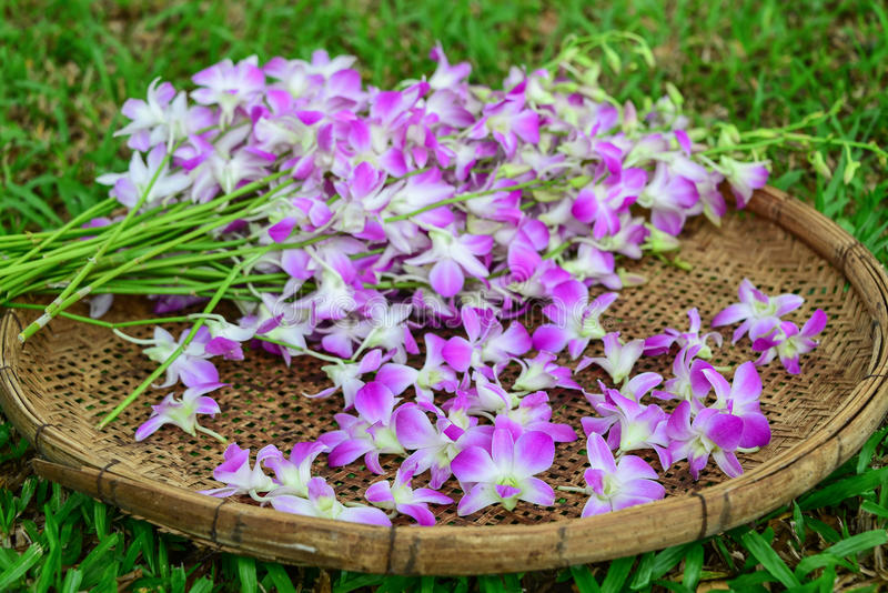 在竹篮子的紫色兰花 图库摄影