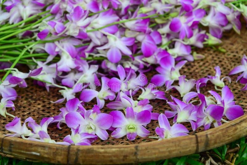 在竹篮子的紫色兰花 库存图片
