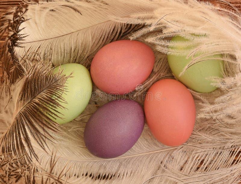 在笔的鸡蛋 免版税库存图片