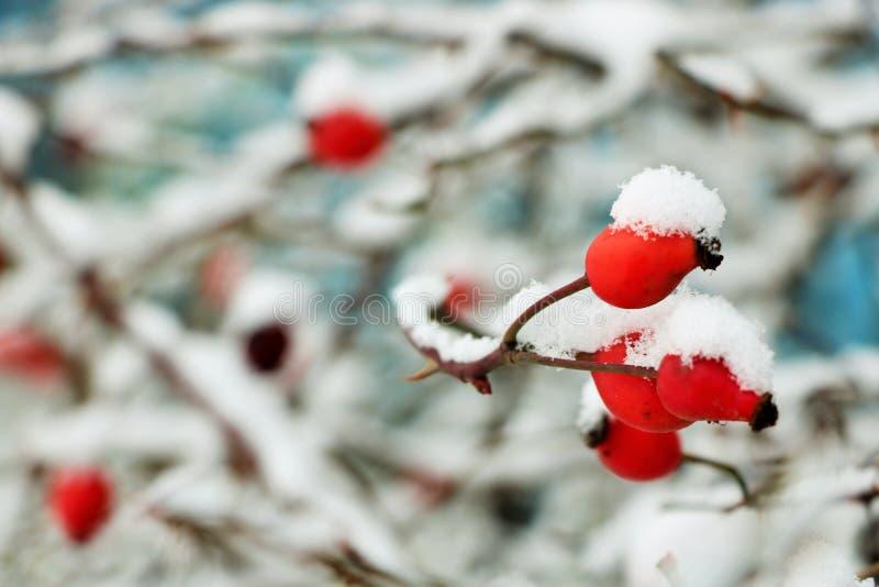 在第一冬天雪的层数的下罗斯, 库存照片