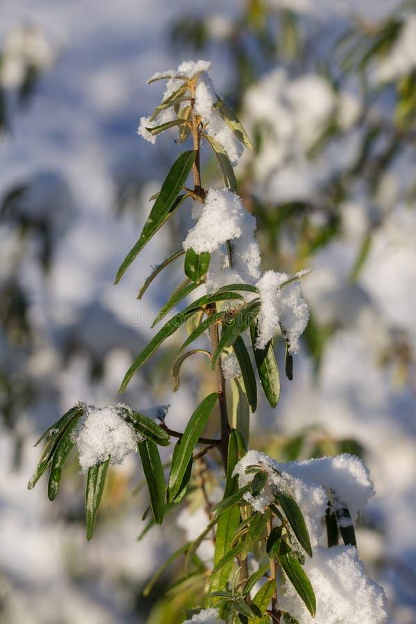 在第一雪以后 库存照片