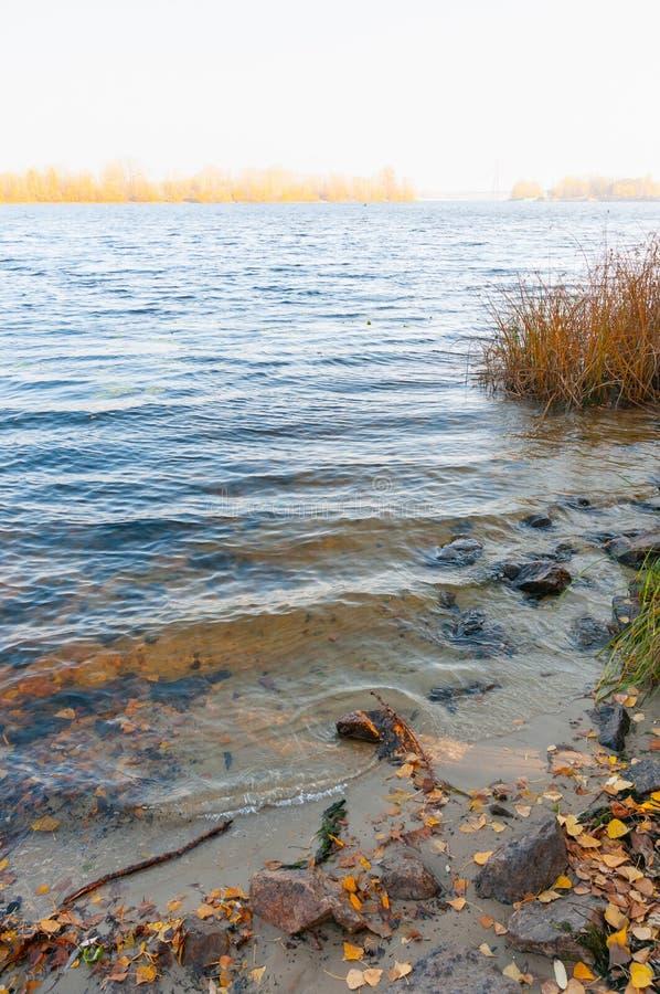 在第聂伯河的岸的秋叶 图库摄影