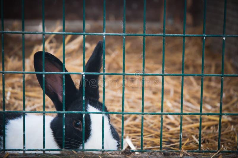 在笼子的兔子 免版税库存照片