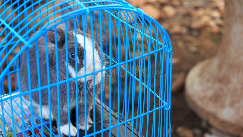 在笼子的兔子 免版税图库摄影
