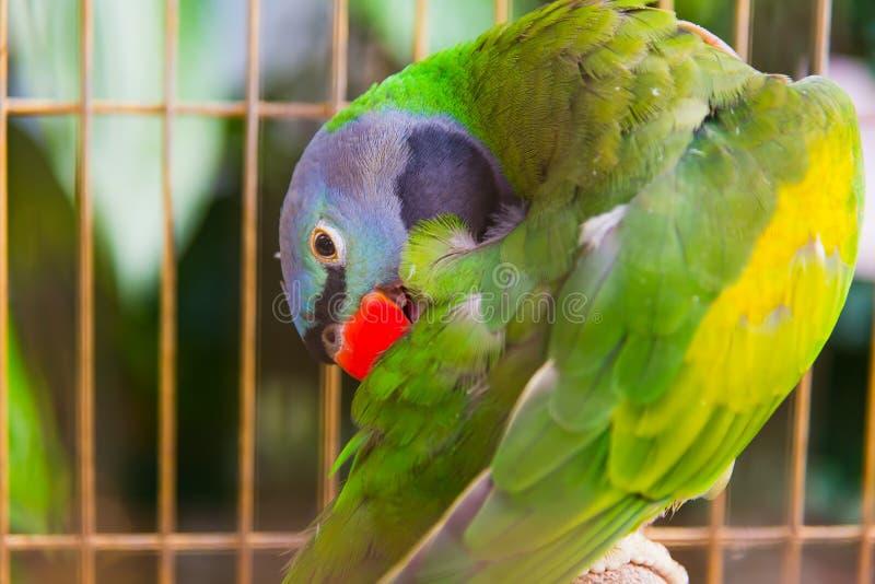 在笼子的大鹦鹉在动物园里 免版税库存照片
