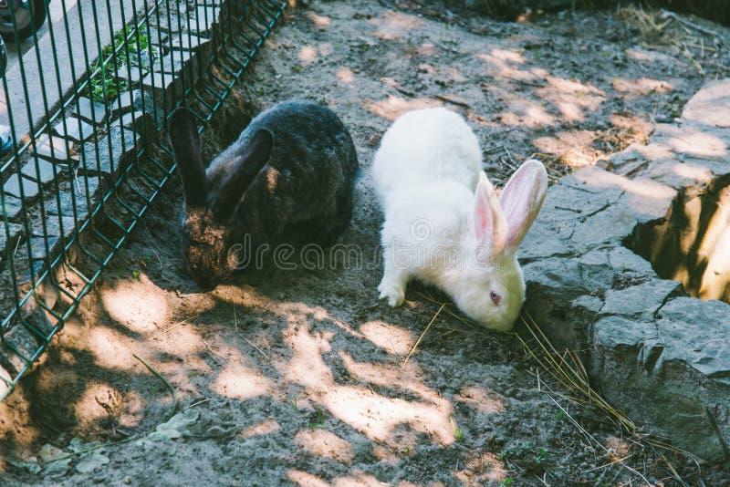 在笼子的白色和黑兔子 免版税库存照片
