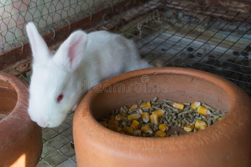 在笼子的白色小兔子 免版税库存图片