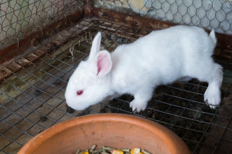在笼子的白色小兔子 免版税图库摄影