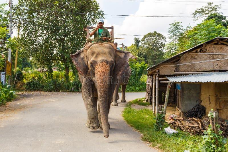 在等候游人的大象的指南 免版税库存图片