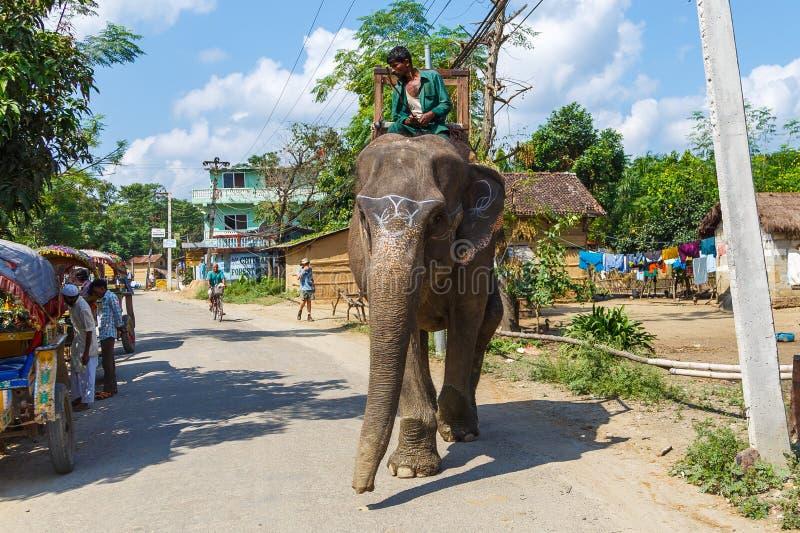 在等候游人的大象的指南 库存照片