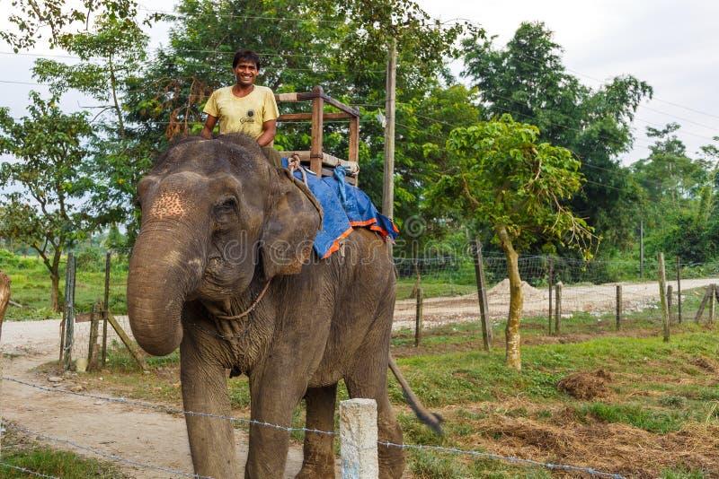 在等候游人的大象的指南 免版税库存照片