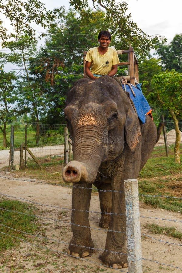 在等候游人的大象的指南 免版税图库摄影