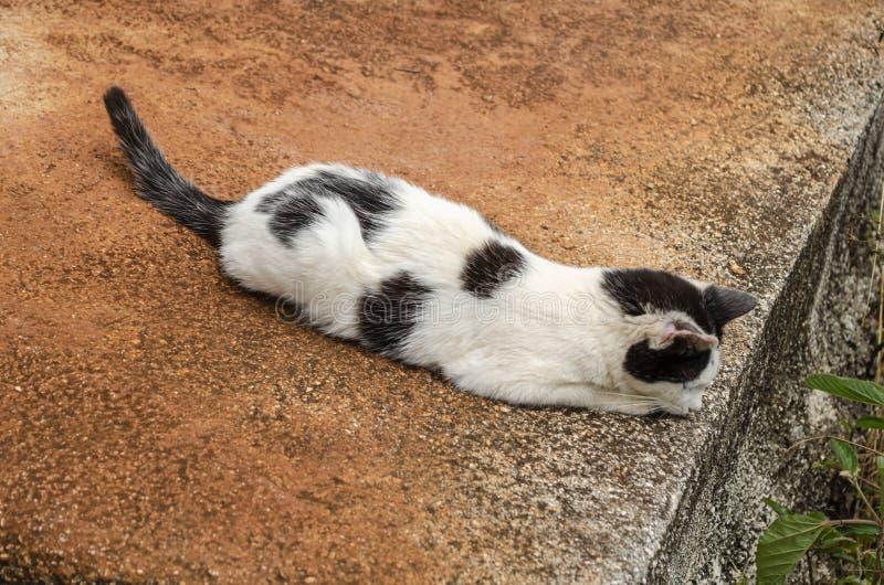 在等待的猫牺牲者 库存照片
