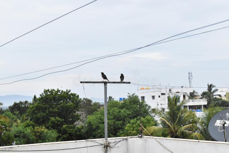 在管子的两只鸟 免版税库存图片
