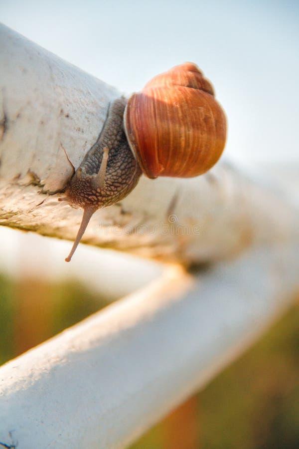 在管子的蜗牛 免版税库存图片