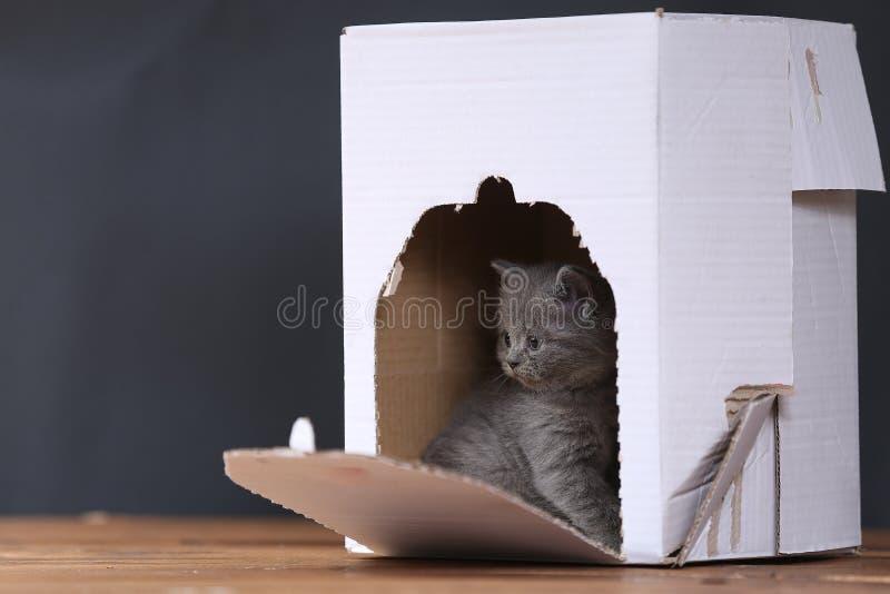 在箱子的小猫 免版税库存图片