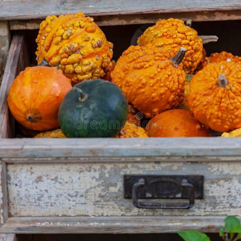 在箱子的秋天南瓜 库存图片