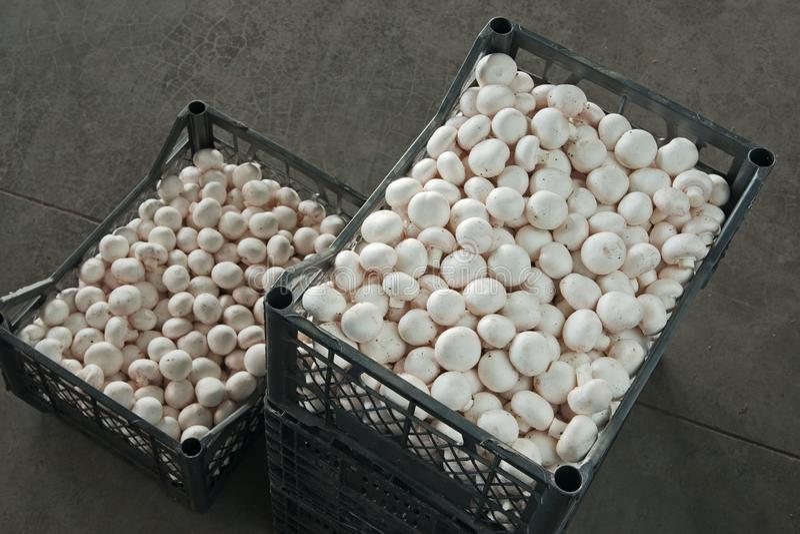 在箱子的蘑菇 免版税图库摄影