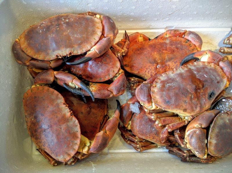 在箱子的活螃蟹 免版税库存图片