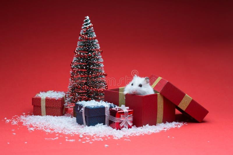 在箱子里面的逗人喜爱的圣诞节仓鼠在圣诞树附近 图库摄影