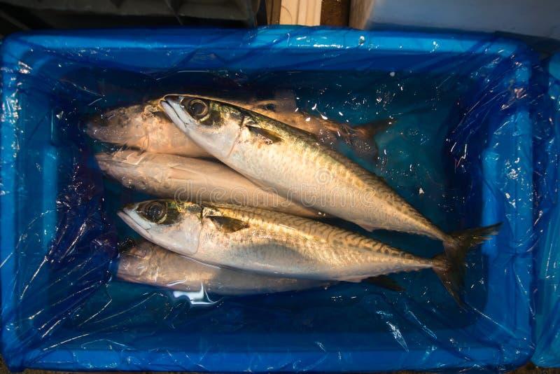 在箱子, Longtail金枪鱼,金枪鱼类tonggol的新鲜的海水鱼 库存图片