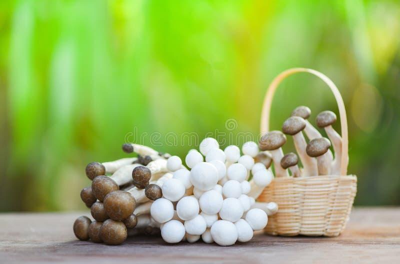 在篮子木自然绿色背景的Shimeji蘑菇 免版税库存照片