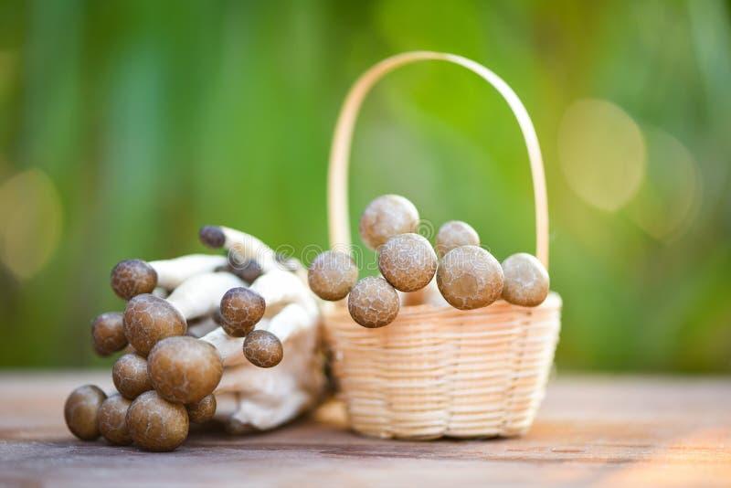 在篮子木自然绿色背景的Shimeji蘑菇 图库摄影