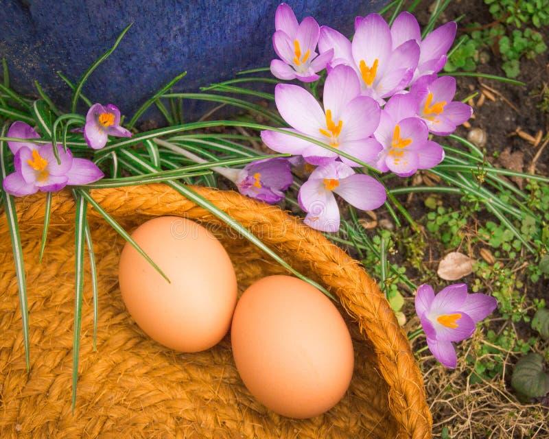 在篮子的两个自然鸡蛋与植物 库存照片