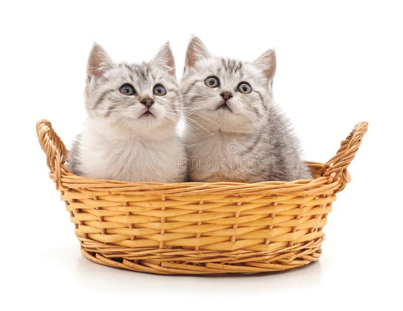 在篮子的两只猫 免版税库存照片