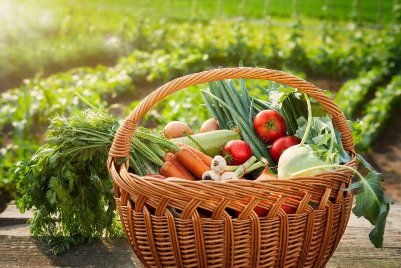 在篮子的健康有机菜 库存图片